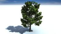 3d model big tree