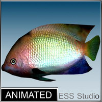 3d model tropical fish