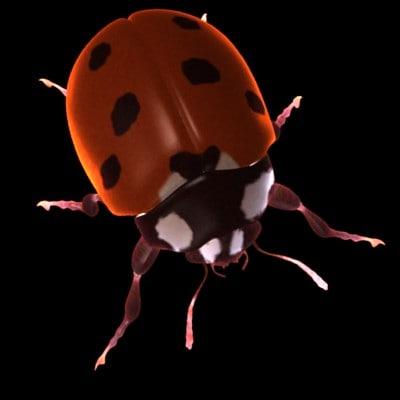 ladybugc.jpg