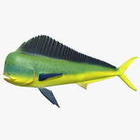 ma mahi dolphin fish