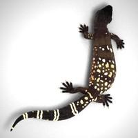beaded lizard 3d model