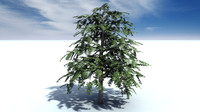 cinema4d tree