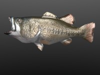 3ds max bass fish