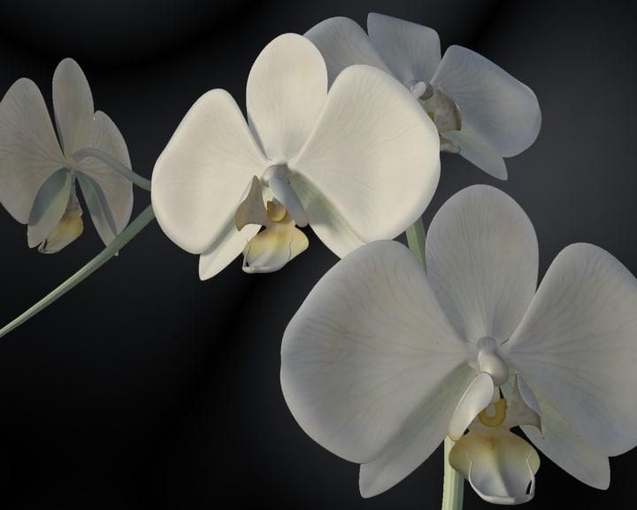 orkide01.jpg
