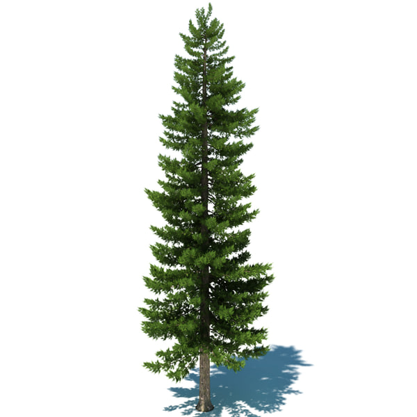 3ds max pine tree - Pine Tree D... by ryrod88