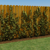 growing vines 3d model