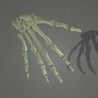 Human skeleton Hand bones