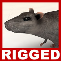 maya rat rigged