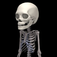 3d 2 years skeleton human