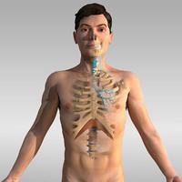 human anatomy - respiratory 3ds