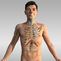 Human Anatomy - respiratory system