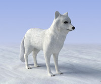 Low Poly Arctic Fox 3D Model