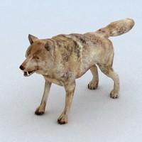 3d wild wolf