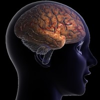Human Brain 2.0