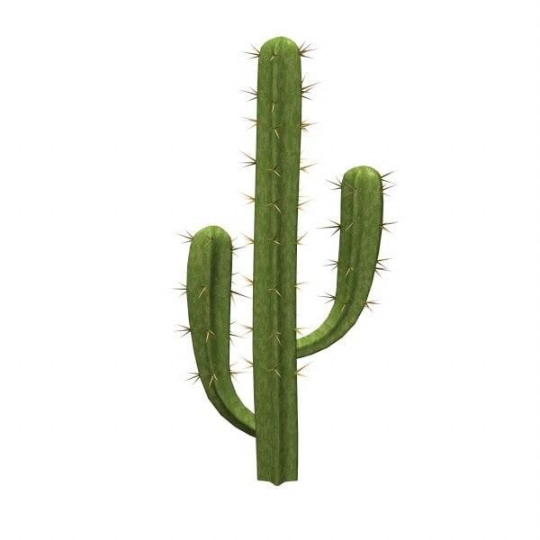 saguaro_render.jpg