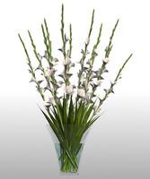 3d model gladiolous vase