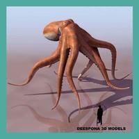 3d model octopus vulgaris