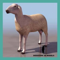 3d model of domestic wool sheep ovine
