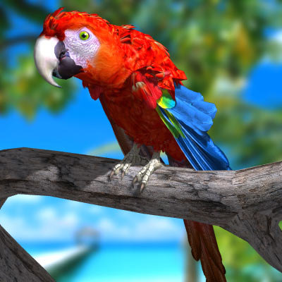 Parrot / Macaw