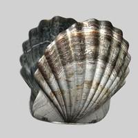 maya shell