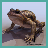 common frog bermeja 3d max