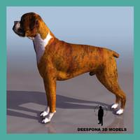 boxer dog 3d max