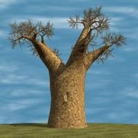 baobab tree max