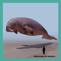 dudongo manati aquatic mammal 3d model