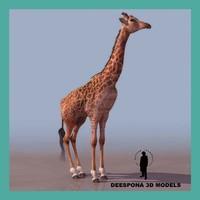 3d giraffe african masai model