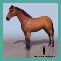 3d model domestic horse