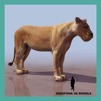 3d african lioness