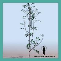 rose plant variant 3d model