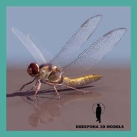 3d dragonfly insect model