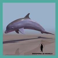 3d dolphin aquatic mammal