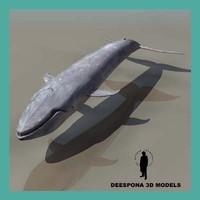 3d humpback whale model