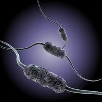 3d amphitrichous bacteria