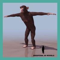 chimpanzee 3d max
