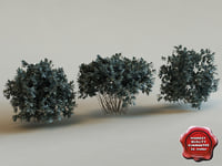 3d model of shrub Conocarpus Erectus