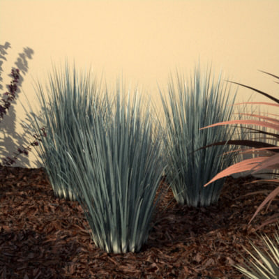 3d ornamental grass model for Small decorative grasses
