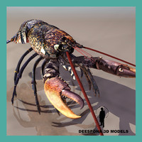 3d model lobster marine crustacean homarus