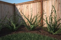 renderings ready shrub - 3d model