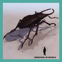 3d stag beetle insect model