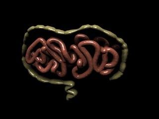intestinescreenshot1.jpg