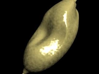 stomachscreenshot3.jpg
