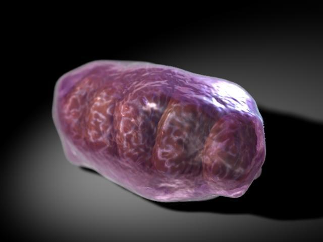 Mitochondria1.jpg