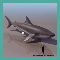 white shark male 3d model