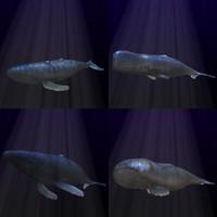 3d humpback whales