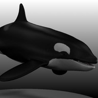 3d female killer whale