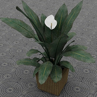 3d model spathifyllum peace lilly