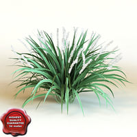 3d model of shrub Liriope Muscari 'Monroe White'